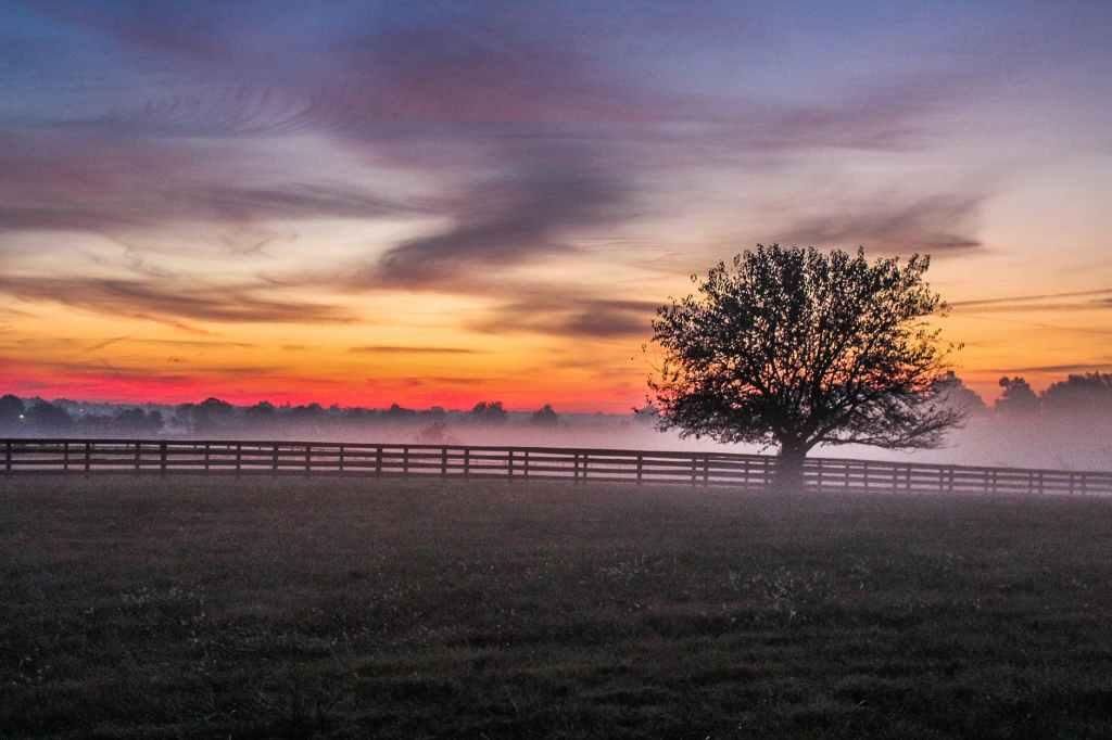 tree meadow fog foggy